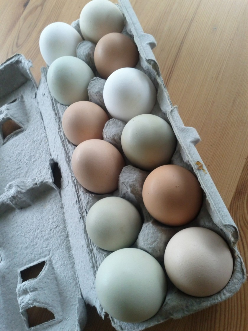 Eggs! Fresh from the farm